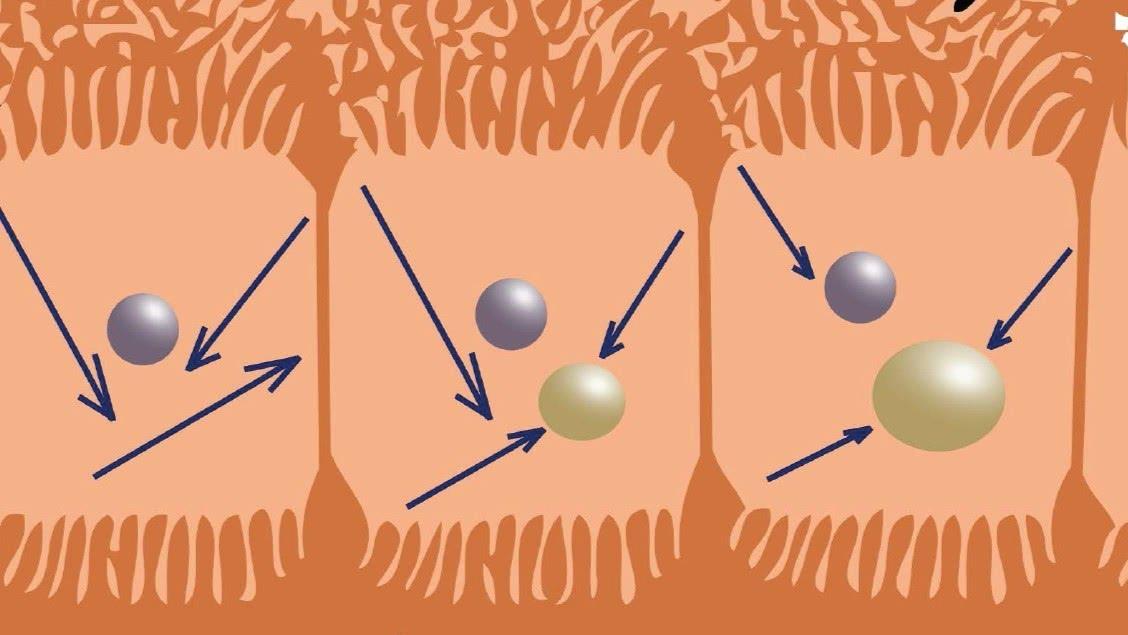 Kwantificatie van diffusie-gewogen beeldvorming in borst en lever weefsel